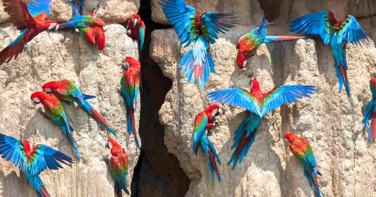 Pica, Parrots, and People – An NPR Articles Discusses Clay Eating